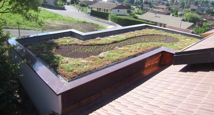 Réhabilitation et extension maison : Toiture végétalisée
